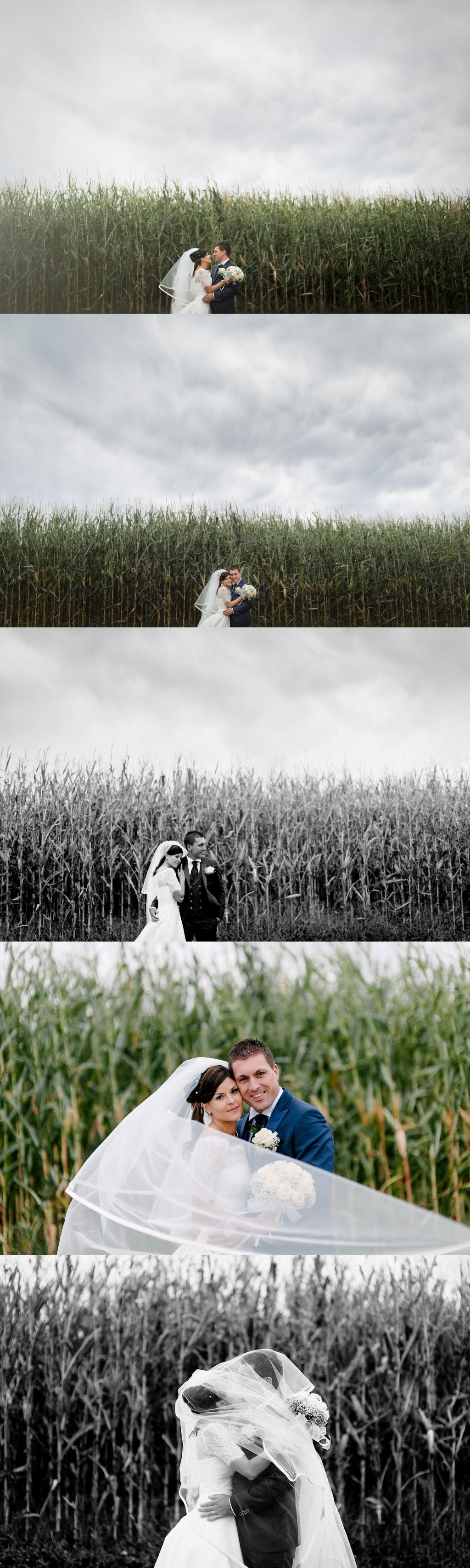 fotografo matrimonio ritratto sposi campo mais
